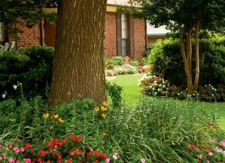 Какво да засадим под дърветата