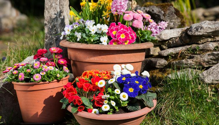 Триковете на баба за отглеждане на цветя