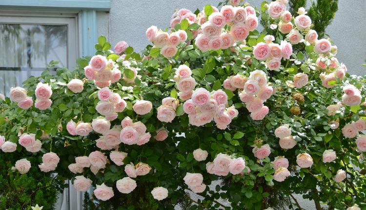 Розов кът за всяка градина