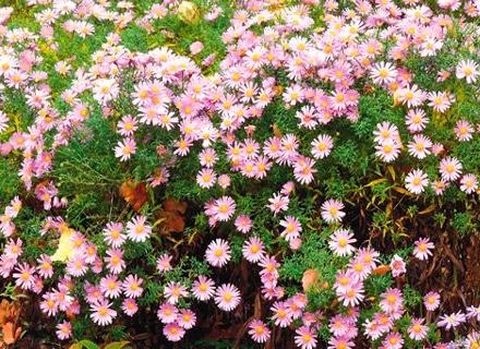 Растения, които цъфтят през септември