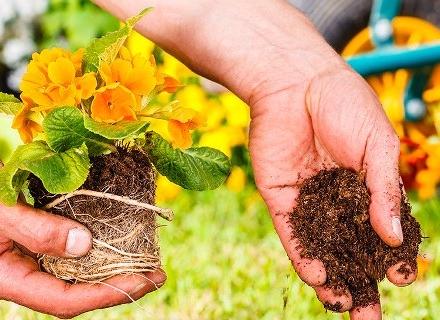 Кои цветя да засадим през септември