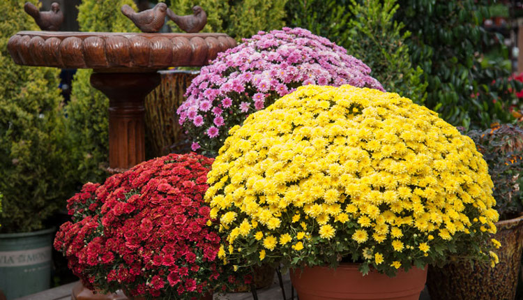 Грижи за цветята през септември