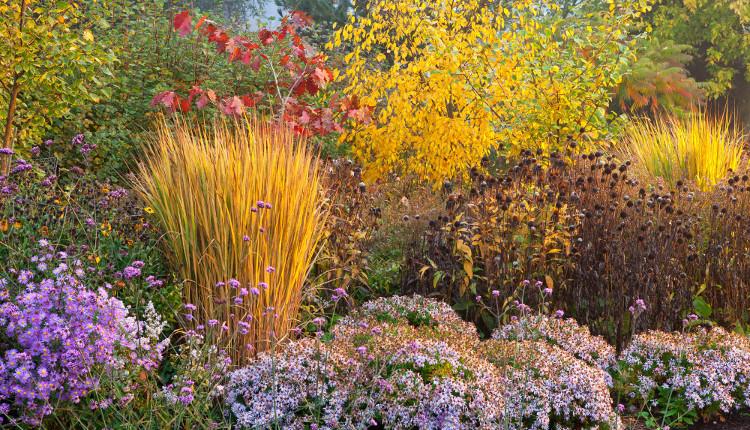 Красива градина и през есента