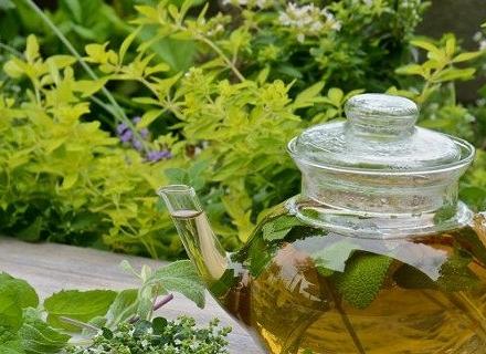 10 лечебни растения, които можем да отгледаме в градината