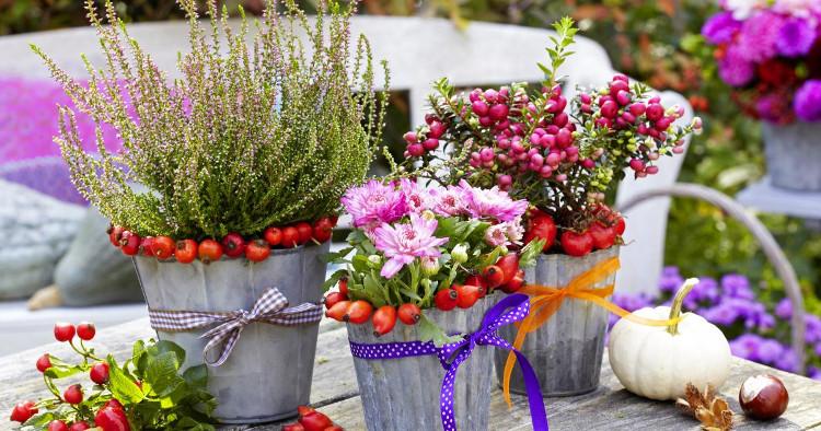 Санитарна резитба за многогодишните растения през есента