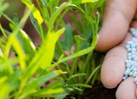 Кога и как да торим растенията през есента