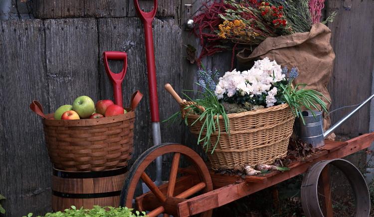 Наръчник за работа в градината през есента