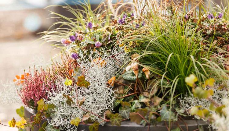 Растения за есенна висяща кошница