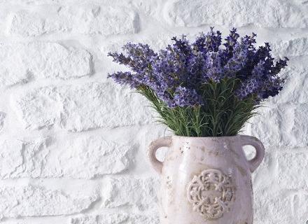 6 растения за по - добър сън