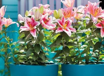 6 стайни растения с неповторим аромат
