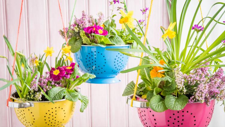 Как да изберем растения за всяка стая в дома