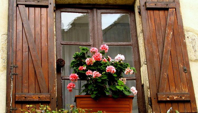 Цветя за източен прозорец