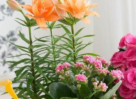 Полезните свойства на стайните растения