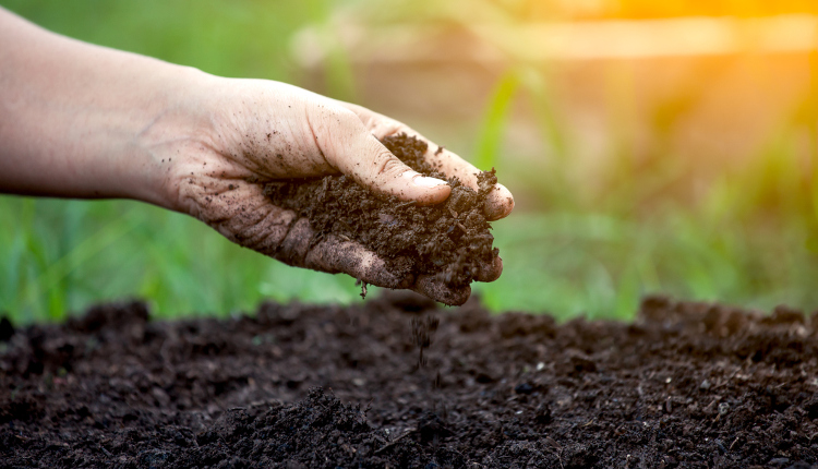 Какво трябва да знаем за градинската почва