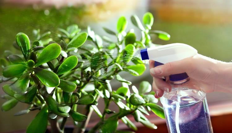 Трябва ли да подхранваме цветята през зимата