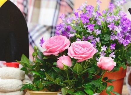 Кои цветя да садим през пролетта