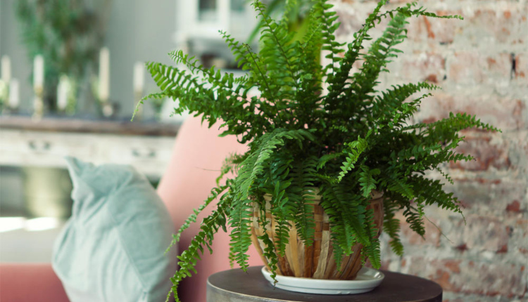 10 стайни растения за тъмна стая