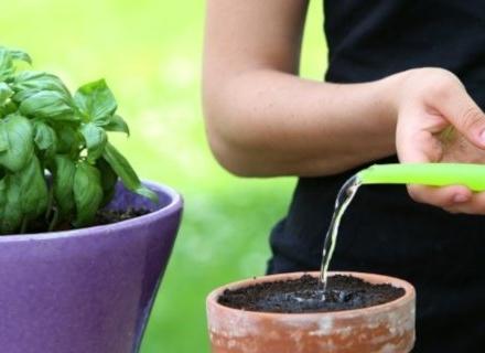 С каква вода да поливаме стайните растения