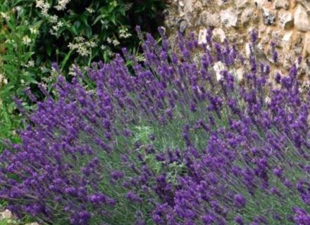 Ефектен бордюр от цветя и храсти