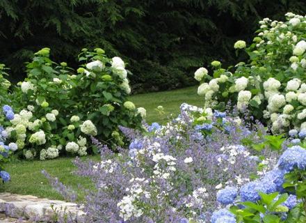 Най - честите грешки в оформлението на градината