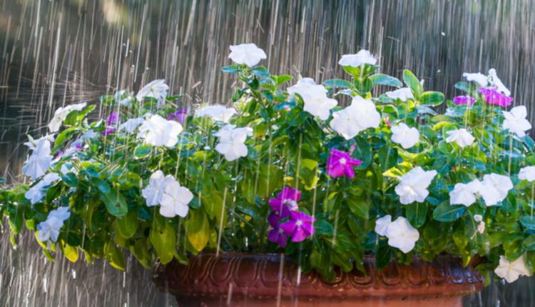 И цветята се радват на топъл душ