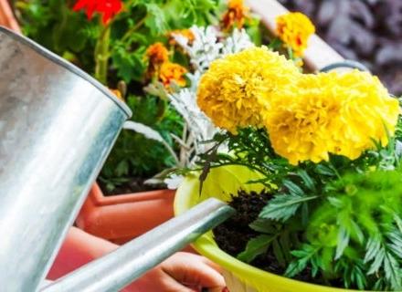 От какви хранителни вещества се нуждаят растенията?