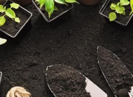 Всичко, което трябва да знаем за градинската почва