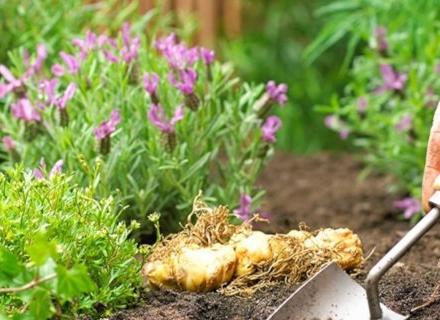 Добавки за подобряване на почвата