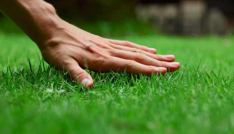 Тревната площ - засаждане, грижи, проблеми