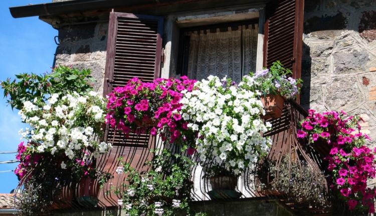Къде да поставим растенията на малкия балкон