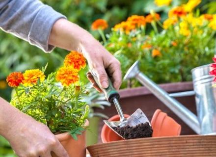 Почви за стайни растения - видове и приложение