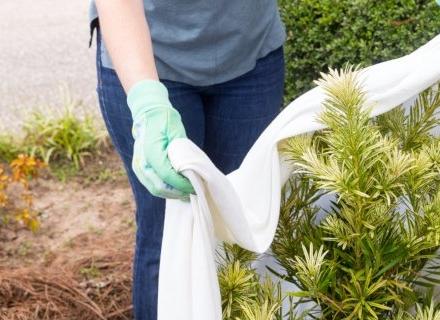 Методи за предпазване на растенията в градината