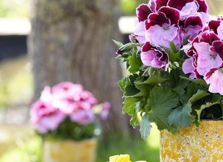 Гъбни болести по стайните растения