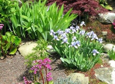 Растенията в алпинеума
