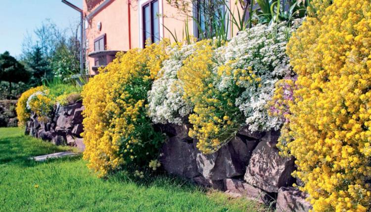 Подпорна стена от естествени камъни - изграждане, озеленяване