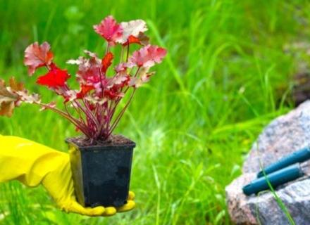 Кои цветя да засадим през май