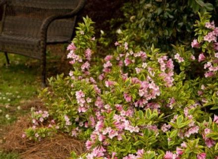 Ефектни храсти за летния двор на вилата