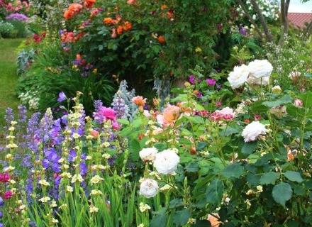 Рози в ландшафтния дизайн