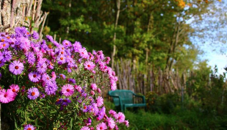Да изпълним градина с багри
