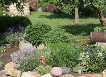 Летни аромати в градината