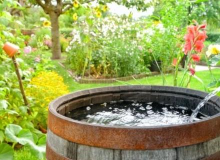 Как да създадем екологична градина