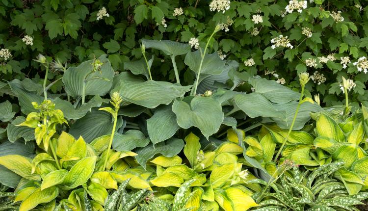 Впечатляващи растения за сенчестите кътчета на двора