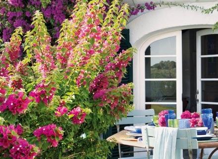10 екзотични растения, подходящи за отглеждане у нас