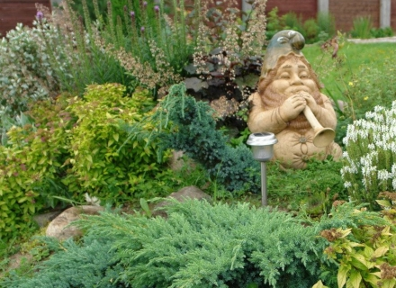 Декоративните хвойни в озеленяването