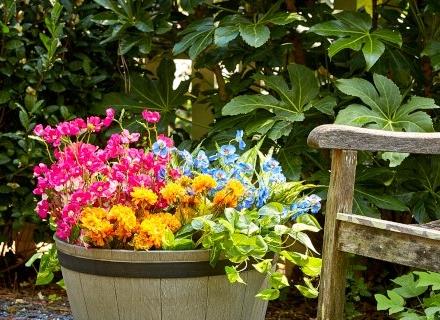 Цветни композиции за двора и терасата