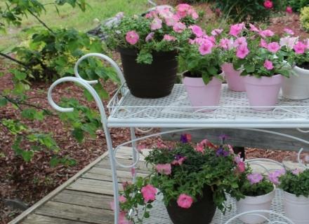 Евтини идеи за декорация на градината