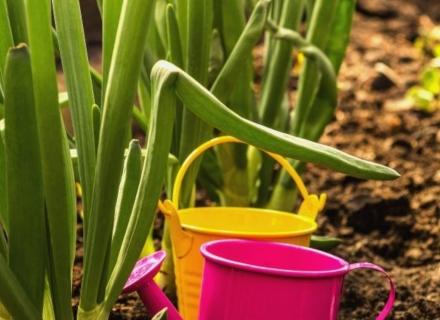 Домашни средства за първа помощ в градината