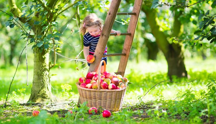 Плодните дръвчета в озеленяването-избор и грижи