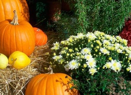 Слънчевите багри на есента