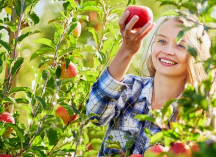 Как да напояваме овощната градина